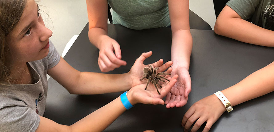 Campers holding a tarantula in their hands.