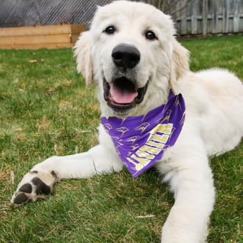 Laurier helping animals in need through new community partnership